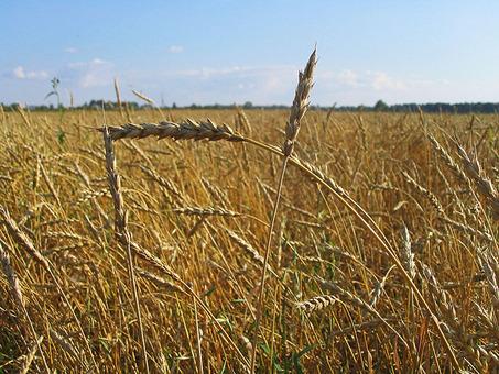 Объем экспорта зерновых составляет 18,4 млн тонн